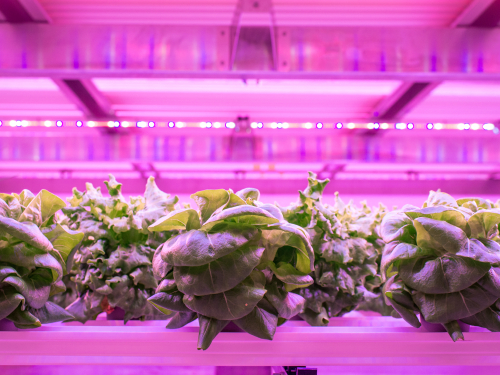 Netled Oy and Astwood Infrastructure collaborate to build Industrial scale vertical farms worldwide