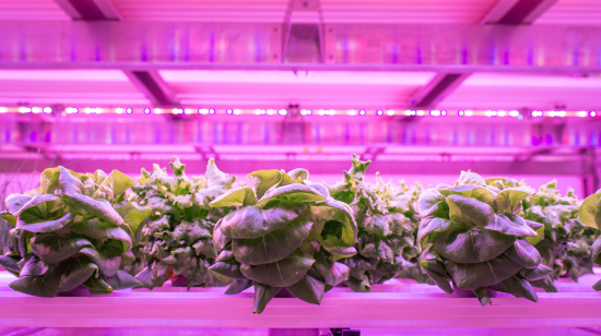 vertical-farming.jpg